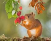 机灵可爱的松鼠图片(15张)