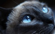 可爱的小黑猫图片(22张)