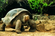 大龟图片(48张)
