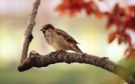 麻雀图片(6张)