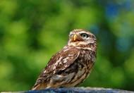 眼神锐利的猫头鹰图片(10张)