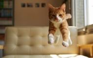 可爱的动物跳跃图片(19张)