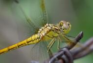 微距蜻蜓图片(9张)