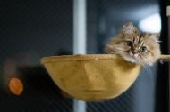 Ben Torode:可爱小猫黛西图片(15张)