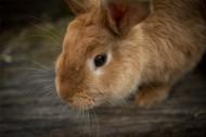 毛茸茸的兔子图片(15张)