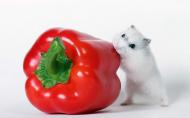 超可爱超萌的小仓鼠图片(17张)
