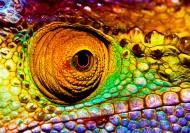 蜥蜴变色龙图片  (12张)