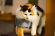 悠然自得的猫咪图片(10张)