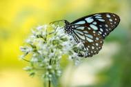 枝头的蝴蝶图片(12张)