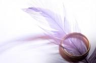 轻盈柔软的羽毛图片(14张)