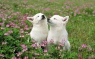 可爱的动物图片(9张)