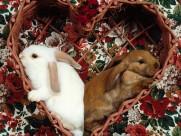 兔子图片(25张)