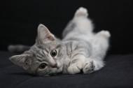 毛绒绒的幼猫图片(10张)
