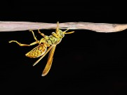 各种昆虫微距摄影图片(19张)