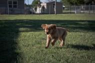 奔跑的小狗图片(12张)