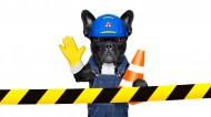 职业装宠物狗图片(12张)