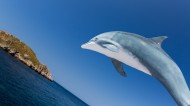 可爱海豚图片(8张)