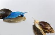 彩色的蜗牛图片(11张)