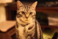 毛绒绒的猫咪图片(10张)