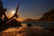 翱翔的海鸥的图片(12张)