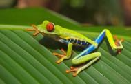叶子上的青蛙图片(10张)