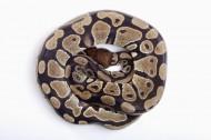 蛇图片(8张)