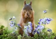 可爱的松鼠动物图片(15张)