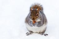 雪地里嬉戏的动物图片(19张)