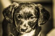 可爱的小狗狗图片(9张)