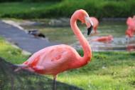 羽毛光鲜的火烈鸟图片(16张)