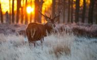 麋鹿图片(6张)