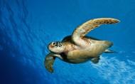海龟图片(10张)