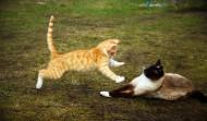 小猫战斗图片(15张)