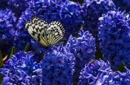 美丽的蝴蝶图片(5张)