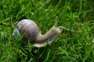爬行缓慢的蜗牛图片(14张)