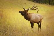 野生鹿图片(11张)