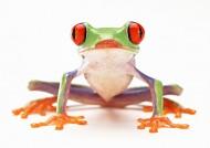 青蛙图片(27张)
