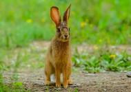 野兔图片(5张)