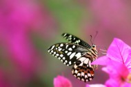 恋花的蝴蝶图片(10张)