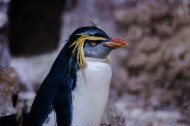 步履蹒跚的南极企鹅图片(9张)