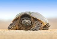 乌龟高清图片(12张)