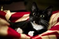 黑猫图片(16张)