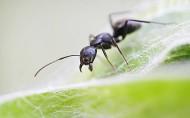 蚂蚁微距图片(10张)