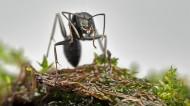 蚂蚁图片(12张)
