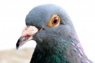 代表和平的鸽子图片(22张)