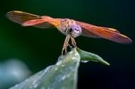 蜻蜓图片(5张)