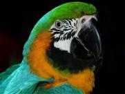 古灵精怪的鹦鹉图片(18张)