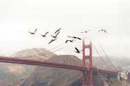 鸟在天空飞翔的图片(12张)