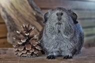 可爱的豚鼠图片(15张)