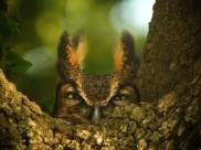 眼神尖锐的猫头鹰图片(10张)
